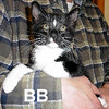 BB was adopted from the Cat House and Adoption Center on Saturday, May 20, 2017.
