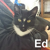 Ed (FIV positive) was adopted from the Cat House and Adoption Center on April 1, 2017.