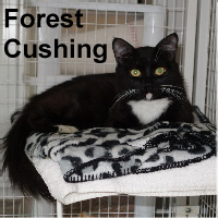 Forest Cushing was adopted from the Cat House and Adoption Center on Monday, September 26, 2016.<br /> <br /> Forest Cushing<br /> <br /> Out of the forest and into your heart.<br /> <br /> He was so ready to get the love he had been yearning for now that he's rested up. Forest is very sweet and anxious for a new life with a companion. Young, handsome and incredibly sweet.