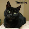Timmie was adopted from the Cat House and Adoption Center on Saturday, April 22, 2017.<br /> <br /> Timmie<br /> <br /> Timeless treasure.<br /> <br /> This little lady is as sweet as she can be and feels like the lottery continues to roll in with the volunteers. Love, food, clean litter box, treats and playtime. Gentle and grateful.