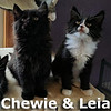 Chewie and Leia were adopted together from the Cat House and Adoption Center on Saturday, June 17, 2017.