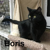 Boris was adopted from the Cat House and Adoption Center on Saturday, January 21, 2017.
