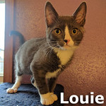 Duke and Louie were adopted together from the Cat House and Adoption Center on Saturday, January 28, 2017.