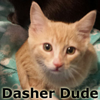 Dasher Dude was adopted from his foster home at Steamboat Animal Hospital on Thursday, January 26, 2017.