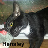 Hensley was adopted from the Cat House and Adoption Center on Saturday, October 8, 2016.<br /> <br /> Hensley<br /> <br /> Spare a cuddle or two?<br /> <br /> When Hensley comes around looking for snacks and pets, who can resist? He is very affectionate, goofy, handsome, and an all around loveable young guy. He wants to relax in your arms and purr any worries away.