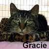 Gracie was adopted from the Cat House and Adoption Center on Saturday, January 7, 2017.