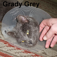 Grady Grey was adopted from the Cat House and Adoption Center on Saturday, October 8, 2016.