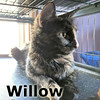 Willow was adopted from the Cat House and Adoption Center on Saturday, March 31, 2018.
