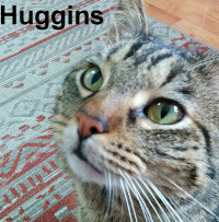 Huggins was adopted from the Cat House and Adoption Center on Saturday, May 13, 2017.