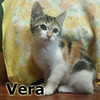 Vera was adopted from her foster home at Hawks Prairie Veterinary Hospital on Wednesday July 12, 2017.