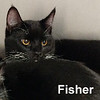 Fisher was adopted from the Cat House and Adoption Center on Saturday, January 28, 2017.