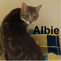 Albie was adopted from Steamboat Animal Hospital on Thursday, April 13, 2017.