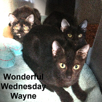 "The ""W"" Family (Wednesday, Wayne, Wonderful) was adopted from the Cat House and Adoption Center on Tuesday, March 21, 2017."
