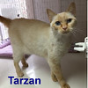 Tarzan was adopted from the Cat House and Adoption Center on Saturday, March 31, 2018.