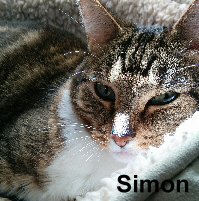 Simon was adopted from the Cat House and Adoption Center on Saturday, June 10, 2017.