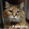 Awreatha was adopted from the Cat House and Adoption Center on Saturday, March 18, 2017.<br /> <br /> Awreatha<br /> <br /> Rockin' in the New Year!<br /> <br /> Ready and waiting, this little lady is ready to rock and roll just as soon as you are. Having an independent attitude and an opinion doesn't make her any different than any other tricolored cat. She is adorable and sweet too.