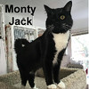 Monty Jack was adopted from the Cat House and Adoption Center on Sunday, November 20, 2016.  <br /> <br /> Monty Jack<br /> <br /> One-eyed Jack.<br /> <br /> Monty has a strong personality and needs an owner that understands how to work through his challenges. He is actually easy to love and wants to be part of a family.