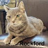 Rockford was adopted from Steamboat Animal Hospital on Thursday, July 20, 2017.