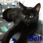 Bell was adopted from the Cat House and Adoption Center on Saturday, January 21, 2017.<br /> <br /> Bell<br /> <br /> Ring in the New Year ...<br /> <br /> and add a darling little lady to your life and into your heart. Bell is fortunate and happy to be warm during our Winter months. She is a special girl and very adaptable to new situations. Are you ready for an adorable girl in your life this year?