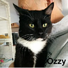 Ozzy was adopted from the Cat House and Adoption Center on Thursday, April 12, 2018.