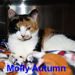 Molly Autumn was adopted from the Cat House and Adoption Center on Saturday, November 19, 2016.