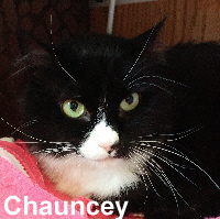 Chauncey was adopted from the Cat House and Adoption Center on Saturday, March 11, 2017.<br /> <br /> Chauncey<br /> <br /> Take a chance on me.<br /> <br /> This adorable little lady has many things she is thankful and lucky for to-date. Her chance at a new life, better health and happiness. Chauncey is a beautiful and quiet girl awaiting to be adored.