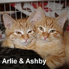 Arlie and Ashby were visited at the Cat House and Adoption Center on Saturday and went to a new home on Sunday, December 4, 2016.