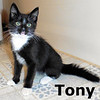 Tony was adopted from the Cat House and Adoption Center on Sunday, July 9, 2017.<br /> <br /> Tony<br /> <br /> Little guy, big purr.<br /> <br /> From alone and shivering on the sidewalk to basking in the morning sun through the window, Tony knows the good life now and wants to spend the rest of it being spoiled by you.