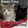 Gwen Grey and Gregory Grey were adopted from the Cat House and Adoption Center on Saturday, November 5, 2016.