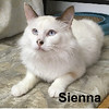 Sienna was adopted from the Cat House and Adoption Center on Tuesday, December 20, 2016.<br /> <br /> Sienna<br /> <br /> Being homeless has challenges.<br /> <br /> With no one to save this fine young lady, a kind couple took care of her until she could come into our shelter. Sienna is a beautiful girl that is young and active.