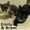 Bram and Emily (brother and sister) were adopted together from the Cat House and Adoption Center on Saturday, July 22, 2017. <br /> <br /> Bram and Emily<br /> <br /> Two peas in a pod.<br /> <br /> These two have all of their ducks in a row, and they have battened up the hatches. Their destination awaits! They are a fun loving pair.