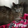 Arrow was adopted from the Cat House and Adoption Center on Saturday, June 17, 2017.