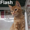 Flash was adopted with Rogue and Storm from the Cat House and Adoption Center on Saturday, October 1, 2016.