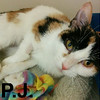 P. J. was adopted from the Cat House and Adoption Center on Saturday, April 14, 2018.<br /> <br /> PJ<br /> <br /> Precious Jem.<br /> <br /> Sweet as can be and twist of Torti-tude, PJ knows how to get what she wants. We have no problem putting pounds on these adorable kids, however we are stretched a bit thin to give the love to all of them and this little gem is so thankful for a second chance.