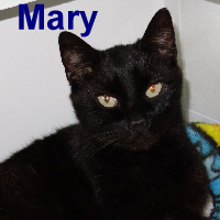 Mary Goose was adopted from the Cat House and Adoption Center on Saturday, April 15, 2017.