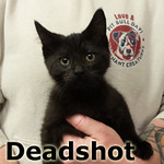 Deadshot was adopted from the Cat House and Adoption Center on Saturday, January 28, 2017.