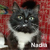 Nadia was adopted from the Cat House and Adoption Center on Friday, January 6, 2017.<br /> <br /> Nadia<br /> <br /> Beautiful!<br /> <br /> With a gentle soul and sweet disposition, this very adorable young lady will reach out and touch you before you have a chance to react. Grateful for the warmth and daily meals, Nadia is wanting to bond with a special someone.