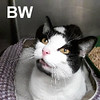 BW was adopted from the Cat House and Adoption Center on April 1, 2017.<br /> <br /> BW<br /> <br /> Black and White<br /> <br /> Striking, sweet, and a gentle giant. BW wants to be nothing more than a companion and snuggle buddy. He is ready and waiting with his bags packed.