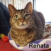 Renata was adopted from the Cat House and Adoption Center on Saturday, April 29, 2017.