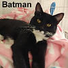 Batman was adopted from the Cat House and Adoption Center on Saturday, June 10, 2017.