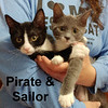 Sailor and Pirate (sister and brother) were adopted together from the Cat House and Adoption Center on Saturday, July 22, 2017.