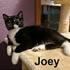 Joey was adopted from the Cat House and Adoption Center on Saturday, March 11, 2017.
