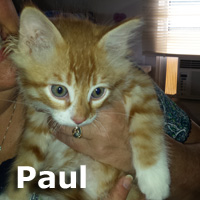 Paul was adopted from the Cat House and Adoption Center on Saturday, June 17, 2017.