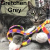 Gretchen was adopted from the Cat House and Adoption Center on Saturday, December 31, 2016. <br /> <br /> Gretchen Grey<br /> <br /> Quite verbal.<br /> <br /> With the cutest little meow, this little lady is always watching and waiting. She wants to be noticed. With a reserved personality and a gift to gab, Gretchen is pleasant and loving.