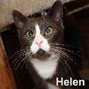 Helen and Louie were adopted from the Cat House and Adoption Center on Saturday, January 21, 2017.<br /> <br /> Louie and Helen<br /> <br /> The blind leading the blind.<br /> <br /> Dashing, darling, dear and don't know they are considered extra-special because they can't see the smiles they bring to your face. Congenital eye disease leaves them healthy and happy, yet blind. If you live a static lifestyle and want companionship, these two will delight you.