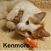 Kenmore (cat locked in unplugged freezer) was adopted from Steamboat Animal Hospital on Tuesday, December 20, 2016.