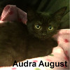 Audra August was adopted from her foster home at Steamboat Animal Hospital on Friday, November 11, 2016.