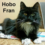 Hobo Fran was adopted from the Cat House and Adoption Center on Saturday, September 24, 2016. <br /> <br /> Hobo Fran<br /> <br /> A Honey.<br /> <br /> She is just a sweet loving lady looking for love. Do you want a companion to love, a shadow behind you and love and affection? Fran is a special lady and ready to meet new potential family members.