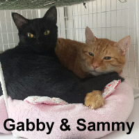 Sammy and Gabby were adopted from the Cat House and Adoption Center on Friday, October 21, 2016.<br /> <br /> Sammy and Gabby<br /> <br /> Ready for a new beginning.<br /> <br /> Foreclosure left them without a permanent home, although still together and ready for the next life change. Gabby loves to talk and Sammy is the silent one. Yet together, they are adorable and priceless