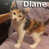 Diane was adopted from her foster home at Steamboat Animal Hospital on Sunday July 23, 2017.<br /> <br /> Diane<br /> <br /> Ready for commitment.<br /> <br /> If you give her your love she promises to grace you with her presence forever in your heart and home. She is quick and witty, and will delight you to no end.